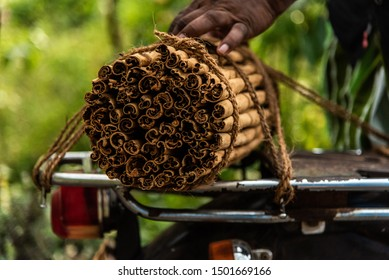 Cinnamon sticks in the form that they leave the plantations from. Being transported to a local spice market in sri Lanka