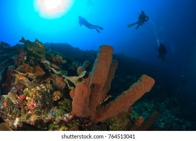 CIRCA 2010 Model Released scuba divers at Tukang Besi Marine Preserve, pristine reefs near Wakatobi Diver Resort, South Sulaweso, Indonesia, S.E. Asia
