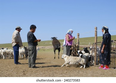 CIRCA HARHORIN, MONGOLIA - AUGUST 25, 2006: Unidentified Mongolians recalculate sheep before cutting wool for felt circa Harhorin, Mongolia.