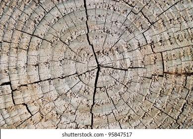 circle bark texture
