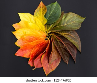 Circle of colorful leaves