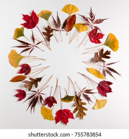 Circle frame of autumn maple, oak and ginkgo leaves on white background with copy space for your text.