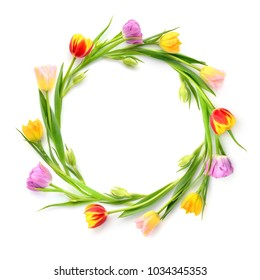Circle of multicolored tulips on a white background with empty space. Top view