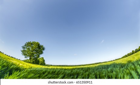 Circle panorama of green wheat field and blue sky, such as if they were taken with a fish-eye lens