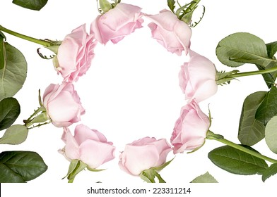 Circle of pink roses on a white background