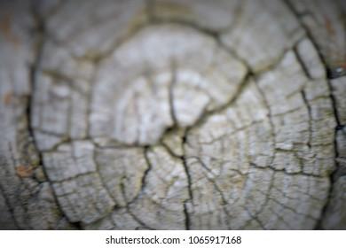 Circle of a tree