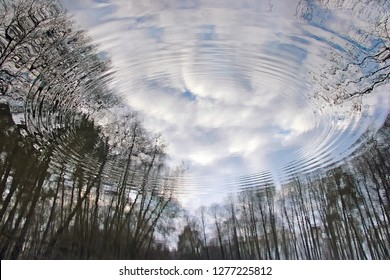 Circles on the water in the reflection of trees and sky