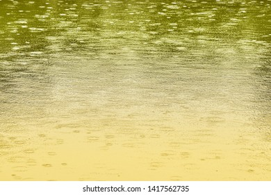 Circles of raindrops can be seen on a pond.