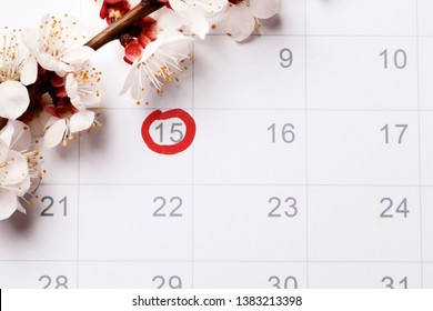 circling the date of the 15th day in the calendar. Concept of fertility chart, trying to have baby, Reminder Ovulation in graph, Planning of pregnancy. Pink bow. beautiful pink peach blossom.