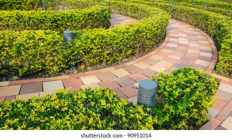 Circular cut bush in outdoor garden