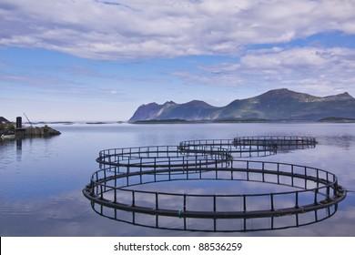 circular fish cage at sea gulf - sea aquaculture in northern Norway