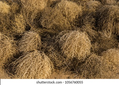 Circular forms of the brown and grey dead tumbleweeds.