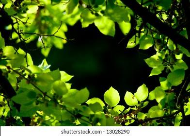 circular organic frame
