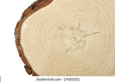 Circular wood cross section with curved lines showing growth.