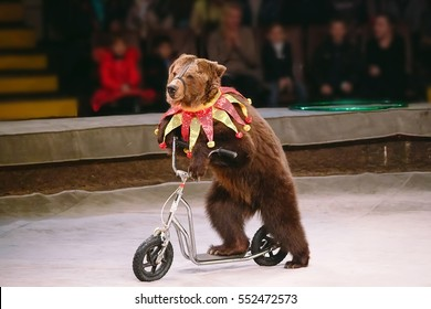Circus bear on speech.