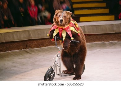 Circus bear on speech.