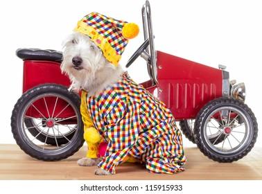 Circus Clown Dog with Circus Car