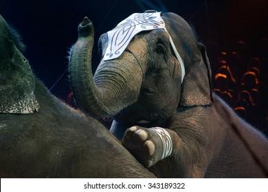 circus elephant on black background