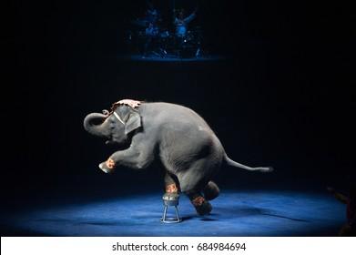 Circus Elephant show