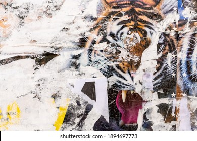 Circus poster with tiger. Old grunge ripped torn vintage collage colorful. Street posters creased crumpled paper surface placard texture background backdrop