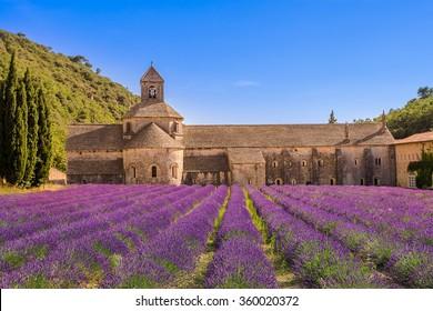 Cistercian Sénanque Abbey with lavender field, in Gordes, Vaucluse, Provence, Provence-Alpes-Côte d'Azur, France