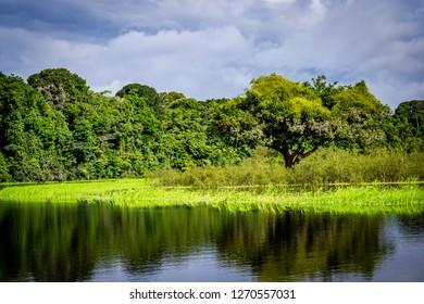 Novo Airão Amazonas fonte: image.shutterstock.com