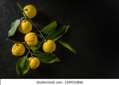 Citron fruit japanese