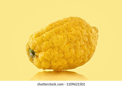 A citron fruit reflected on a yellow background. Citrons are available all year round. They are a versatile ingredient for different uses for many cultures.