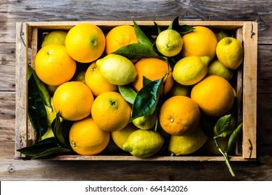 Citrus. Box of fresh citrus lemon and orange.with lemon and orange tree leaves. Harvest concept. Top view,