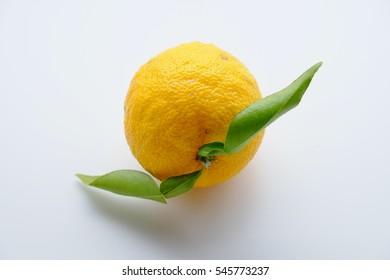 Citrus junos, Citrus ichangensis.