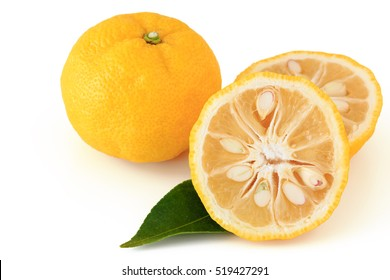 Citrus junos on white background