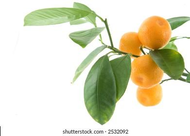Citrus leaf
