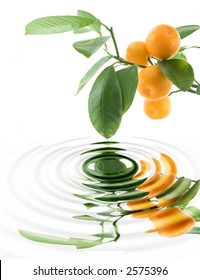 Citrus leaf with rippled water level