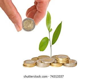 Citrus sapling growing from coins