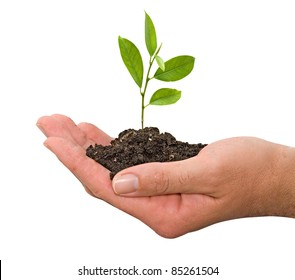 citrus sapling in hands