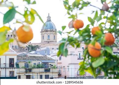 Citrus trees in Palermo, Sicilia