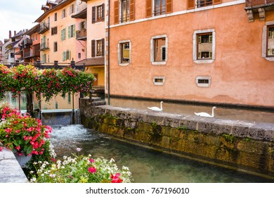City of Annecy. Historical medieval houses, swans swim along the Tue Canal, the embankment is decorated with flowers in the resort town of Annecy in France