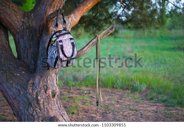 city backpack on a tree