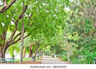 city botanic garden, brisbane
