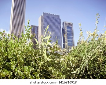 City Buildings with Tall Overgrown Grass and Wildflowers