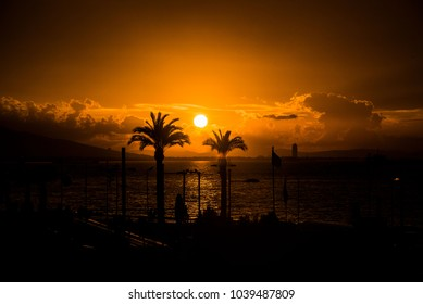 At city center, palm trees in front of sunset by the sea