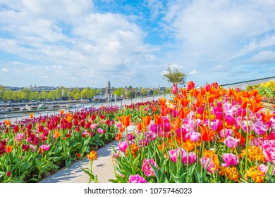City centre of Amsterdam viewed from a roof garden with tulips