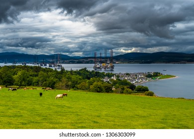 City Of Cromarty With Cattle On Pasture And Oil Rigs In The Cromarty Firth In Scotland