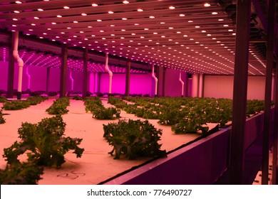 City farm research center
