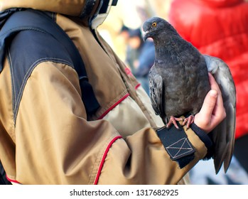 City gray dove on hand.