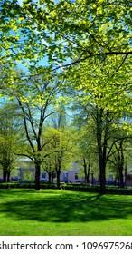 City green park in Riga in the spring