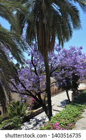the city of Malaga in Spain and the trees in bloom