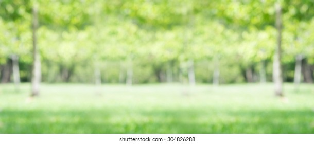 city park bokeh background for backdrops real lens blur