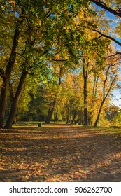 In the city park in the early autumn morning, Kaliningrad, Russia