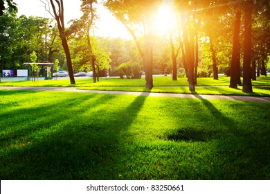 City park with green grass and trees at sunset light